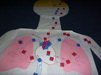 The Homeschool Den: Human Body Unit: Heart and Circulatory System Activities