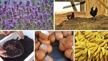 10 Fertilizantes orgánicos caseros