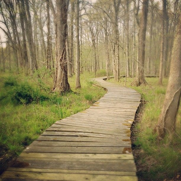 Peaceful Places In Nj: 7 Best Winding Forest Path Images On Pinterest