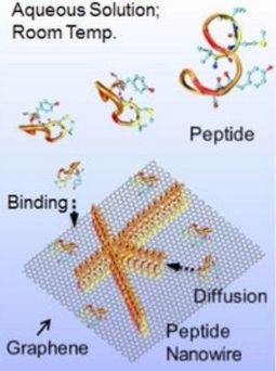 First+step+towards+self-assembled+solid-state+biomedical,+electro-optical+nanodevices