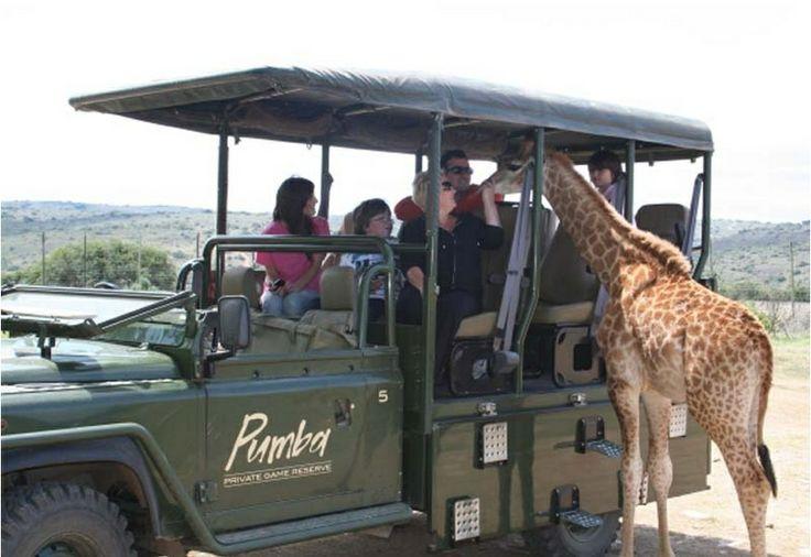 Pumba Private Game Reserve, Eastern Cape, South Africa / Частный заповедник Pumba, Восточный Кейп, Южная Африка