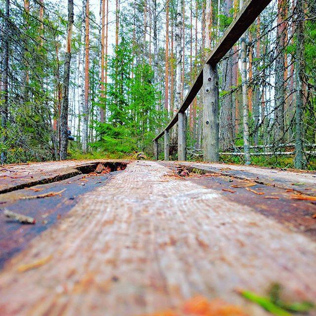 Finnish nature during spring time. Part 6 #finland #nature  #spring #beautiful #suomenkevät #luonto #luontokuva #kaunista #aamu #winled #winledlighting #woodland #metsä #suomi #suomenluonto #kevät #silta #puro #metsäretki #metsässä #sillalla
