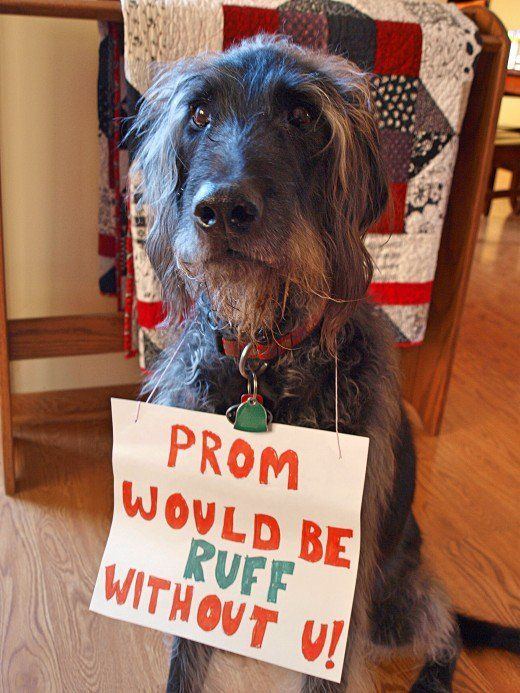 50 Awesome And Easy Promposal Ideas Dogs Cute Prom Proposals