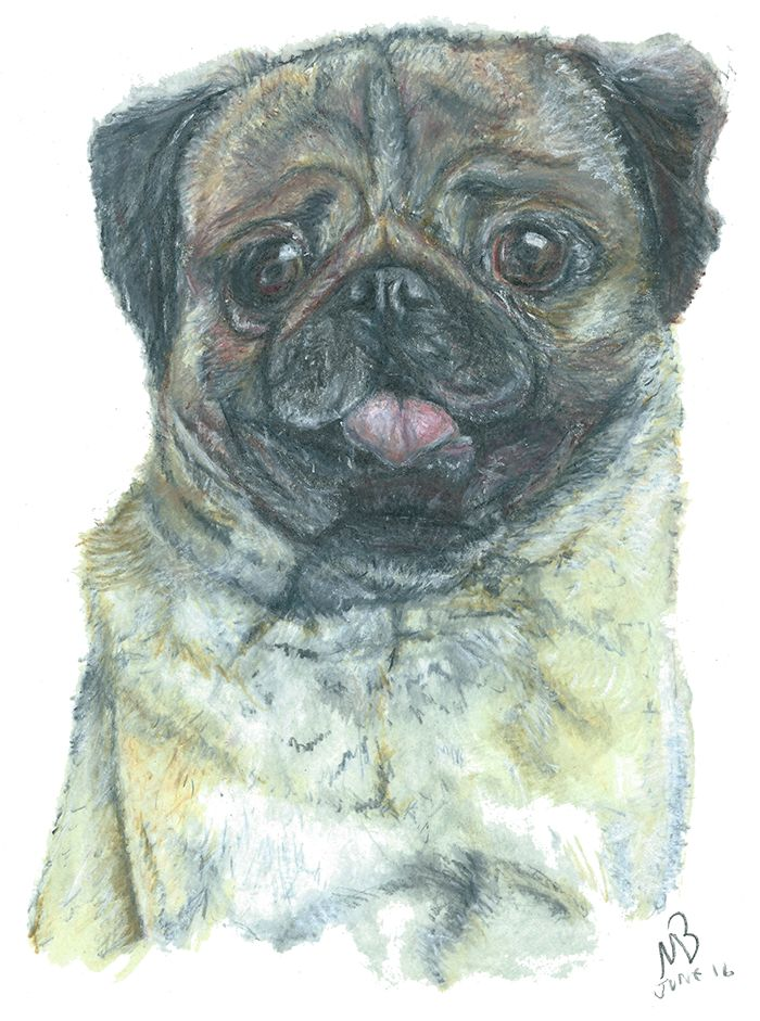 Pug, Dog, Pencil Drawing #dog #pug #dogs #pencils #watercolours #watercolor #art #artwork