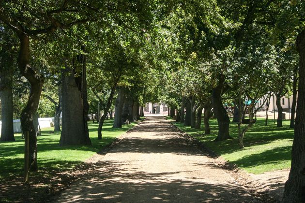 The hundred year old oak lane leading up to the Manor House.  http://citysightseeing-blog.co.za/2015/03/21/historical-groot-constantia-cape-town/
