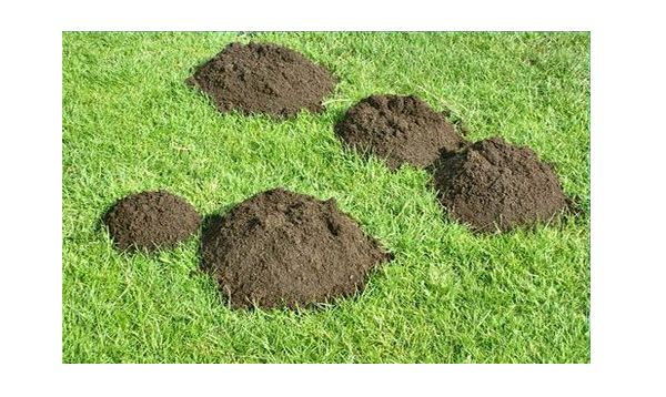 How to Get Rid of Moles. This had some good ideas.