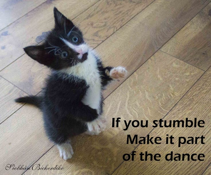 If you stumble make it part of the dance...
