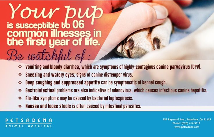 Even with the best nutrition and care at Petsadena Animal Hospital, your puppy can be exposed to a number of dangerous viruses in the first year of life.   Don't hesitate to call (626) 414-5919, if you suspect any threats to pup's health. 🐶💕 For more information, visit our website at http://www.petsadena.com/puppy-and-kitten-care/