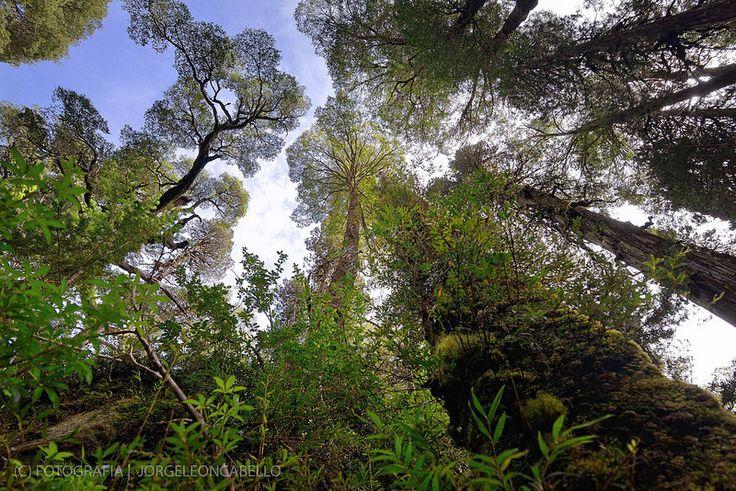 Perspectiva en el bosque  - Parque Tagua Tagua (Patagonia - Chile)
