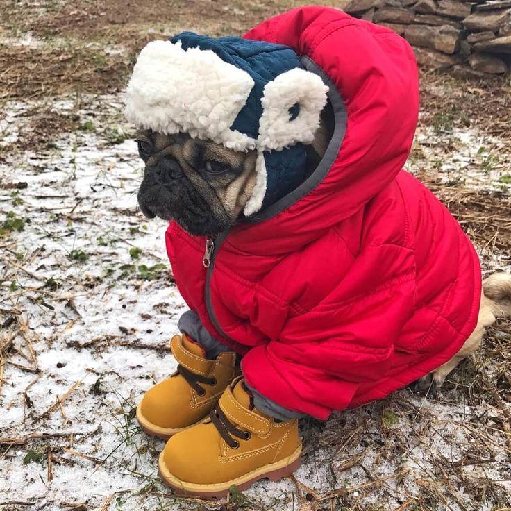 Смешные картинки про холодную осень, прикол шашлык открытки