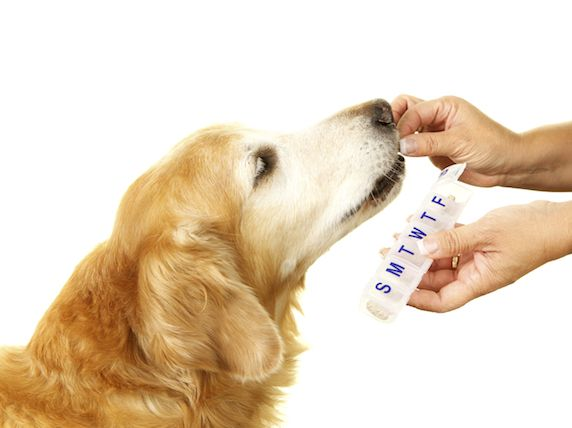 How to Treat Arthritis in Dogs: Glucosamine, Chondroitin Sulfate, Steroids, and NSAIDs