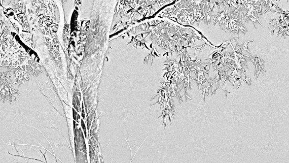 Grey Eucalypt by BlackbirdArtDesign on Etsy, $35.00
