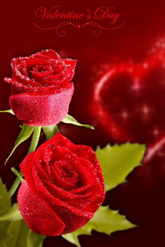 Photo Collection Name Rose Desktop Wallpaper