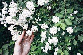 Beauty, Flowers, Green, Hand, Hipster