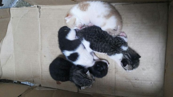 My unofficial pet give birth 4 kittens ;) ♥♥♥