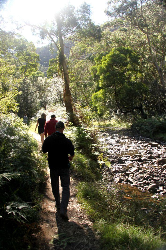 The bush walk - Cumberland River, Victoria Australia.