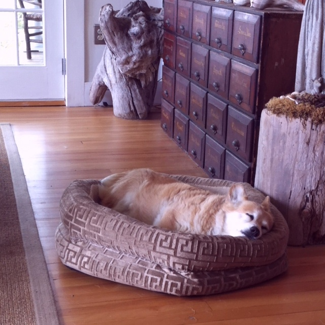 Sadie in her comfy Greek key bed..
