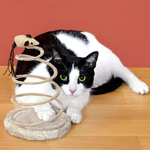 "Product # HC6656 - Keeps kitties entertained for hours! Coiled wire springs into motion whenever your cat swats at it, while swiveling mouse on top will have your favourite feline engaged in a wild ""pounce and chase"" game. Plush-covered wooden base is 6""Diam. 9""H x 6""W  $12.98"
