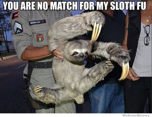 Best Sloth Memes: Sloth Fu