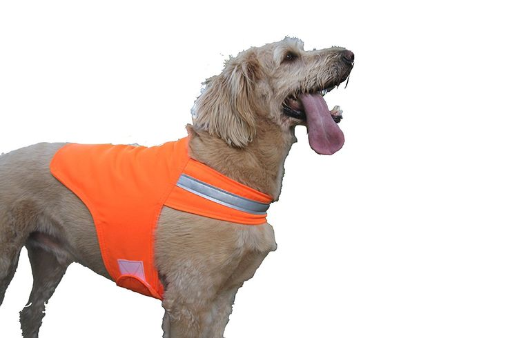 Dog Not Gone Tick Repellent Safety Dog Vest * To view further for this item, visit the image link.