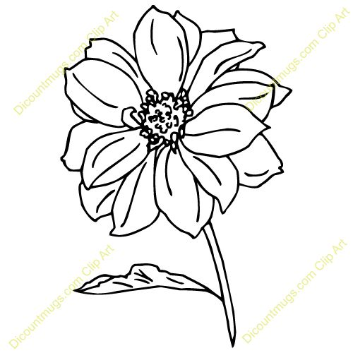 Red Flower Line Drawing : Best images about line art on pinterest free clipart