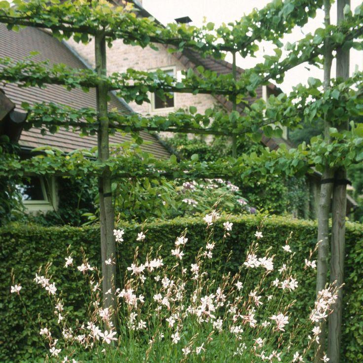 Leibomen - Houtmeyers Plantencentrum - Boomkwekerij