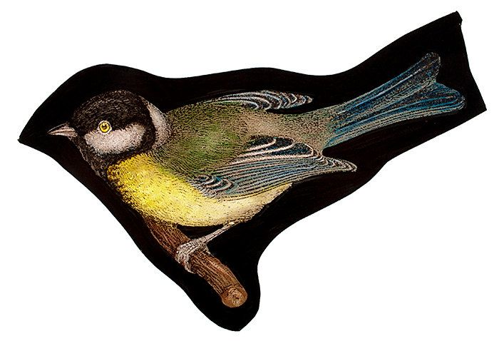 Great Tit  stained glass fragment, kilnfired. For sale at the Etsy shop of Stained GLass Elements.