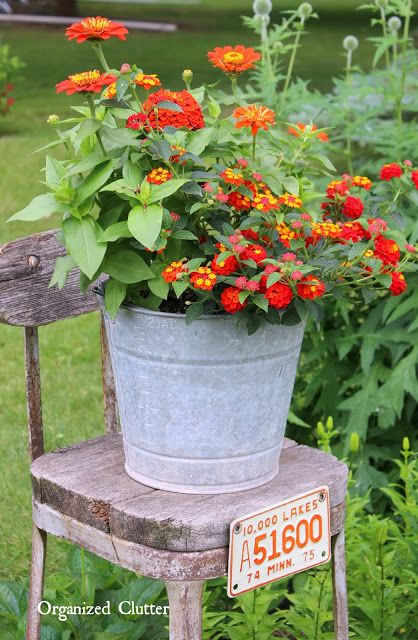 bucket  Beautiful Gardens Flowers in images   Zinnias  Zinnias shoes Lantana old    for    gt  Stools and and men   running