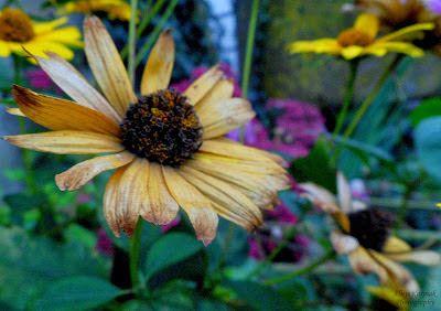 Alice in Wonderland: Rośliny