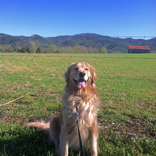 Charlie, taken in Townsend, TN; photo by Amy Cantrell