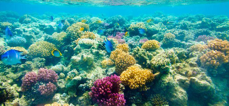 Key West: Catamaran Reef Snorkel | Key West Snorkeling Tours | Snorkel Key West