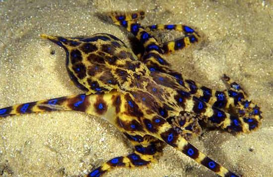 Octopus tattoos - what do they mean? Octopus Tattoos Designs & Symbols - Octopus tattoo meanings