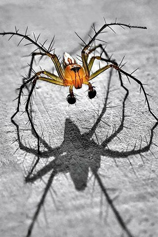 Spider More