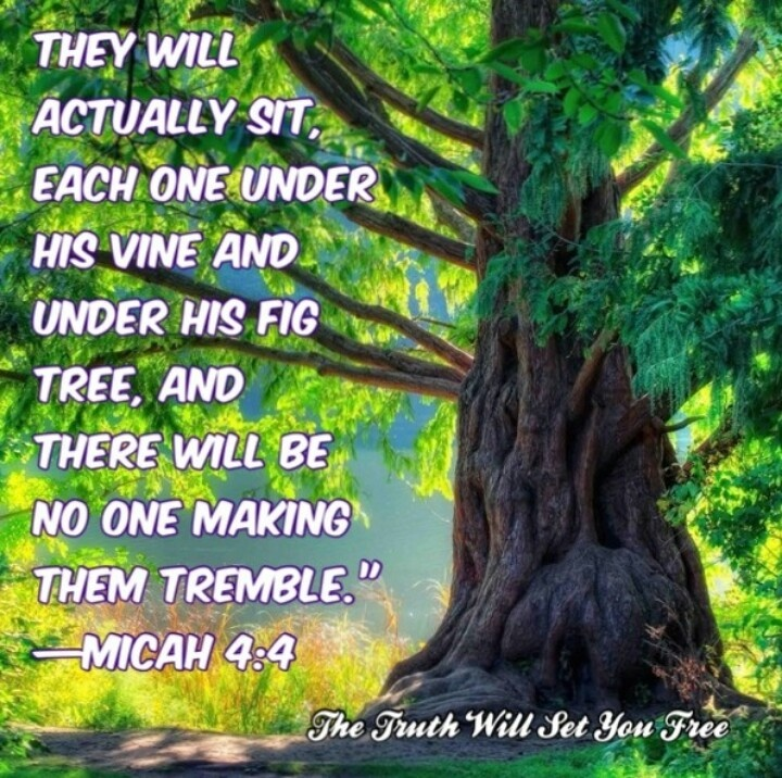 """They will actually sit, each one under his vine and under his fig tree, and there will be no one making [them] tremble; for the very mouth of Jehovah of armies has spoken [it]."" ~Micah 4:4"