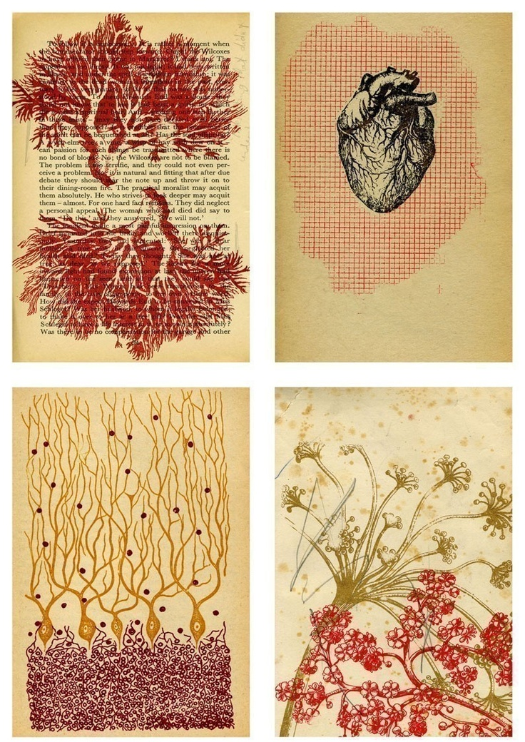print idea, printmaking, anatomical heart, coral, natural, colour, plant