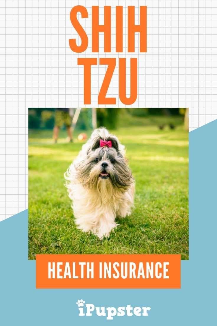 Exploring The Best Shih Tzu Pet Insurance Cover Options Best Health Insurance Health Insurance Supplemental Health Insurance
