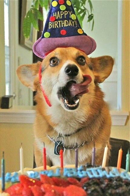 17 Images About Quot Happy Birthday Quot Doggie On Pinterest