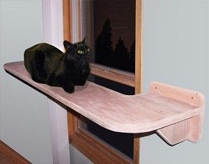 Is this not the coolest cat shelf ever? Wish I had a window for it but it would look strange on my windows!
