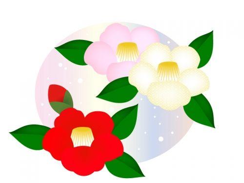 赤・白・ピンク色の椿の年賀イラスト