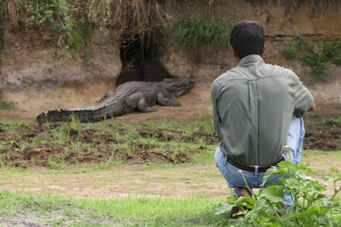 Getting intimate with #crocodiles on the #walking #safari | Holidays in Tanzania | Mbali Mbali Lodges and Camps