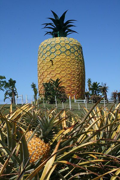 The Big Pineapple, between Port Alfred and Bathurst on the R67 in the Eastern Cape, South Africa.