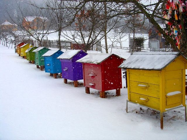 colorful beehives in the snow