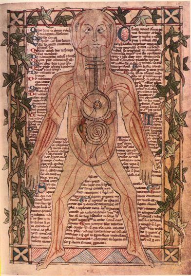 Galen's Venous System
