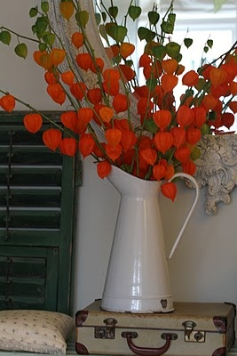 144 best Chinese Lantern Plants~ images on Pinterest ...