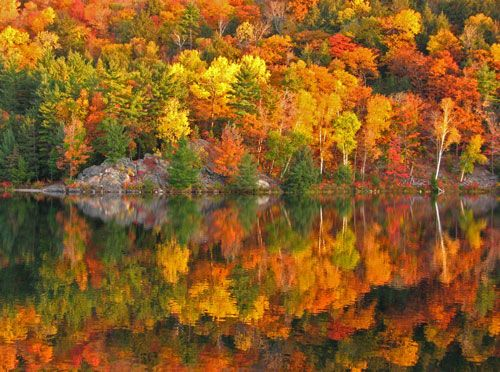 """Autumn is a second spring when every leaf is a flower."""" — Albert Camus"""