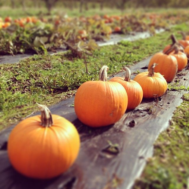 Sopley Farm Shop - great place to go and choose pumpkins with the kids for Halloween