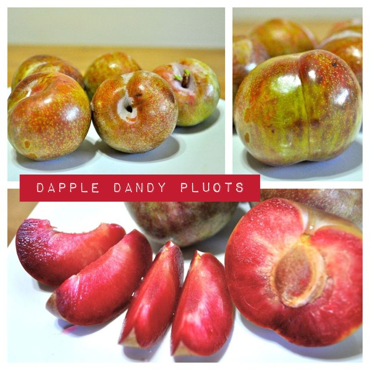 Dapple Dandy Pluots aka dinosaur plums literally just tried for the ...