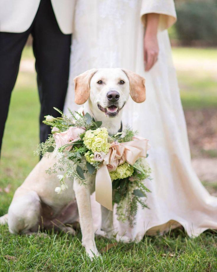 дошло картинки свадебные про животных всегда