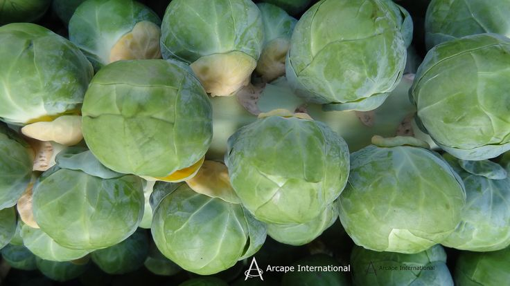 """The traditional British Christmas dinner includes brussel sprouts but they do have a """"love them or hate them"""" reputation.   Brussel sprouts are fresher if they are brought on a stalk."""