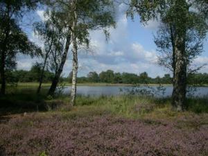 Tussen Almelo en Tubbergen ligt het landgoed Schultenwolde met het Hondeven.